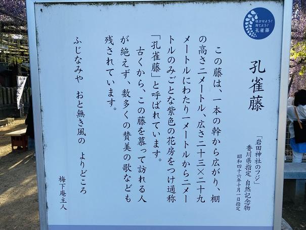 岩田神社 孔雀藤について2