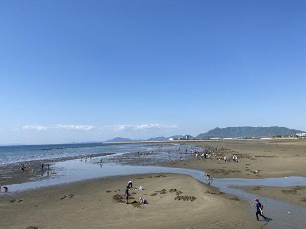 マテ貝の生息地