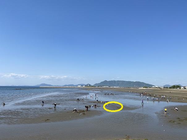 マテ貝が多く生息し好む場所