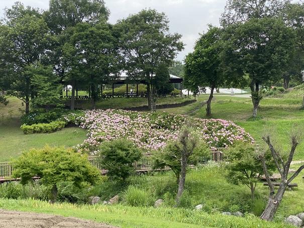 国営讃岐まんのう公園 遠くから見たあじさい苑