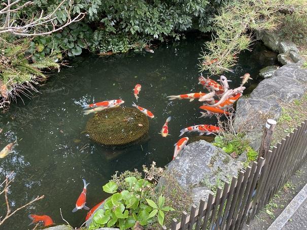 龍山寺 池