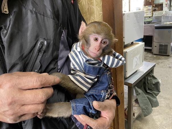 竹山荘 看板猿