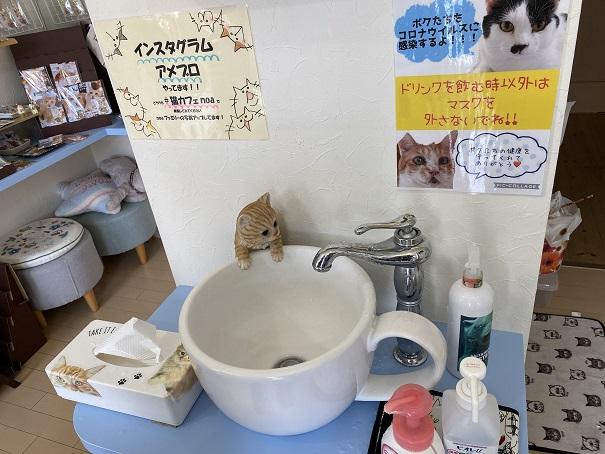 猫カフェnoa 手洗い
