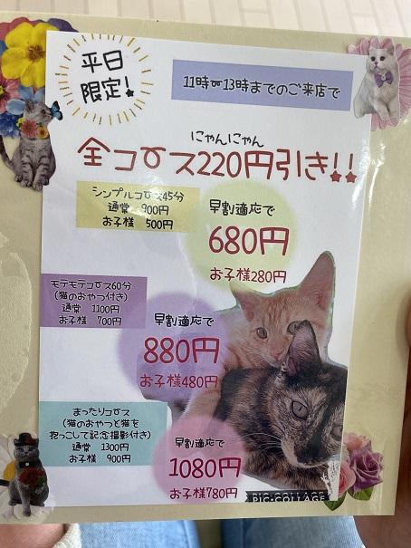 猫カフェnoa 平日限定メニュー