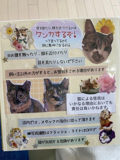 猫カフェnoaルール3