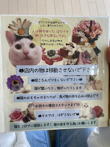 猫カフェNOAルール4