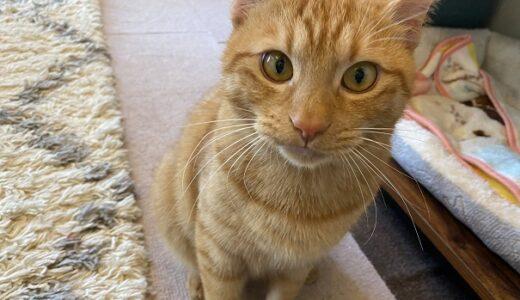 猫カフェnoa 譲渡型保護猫カフェと里親募集 松山市