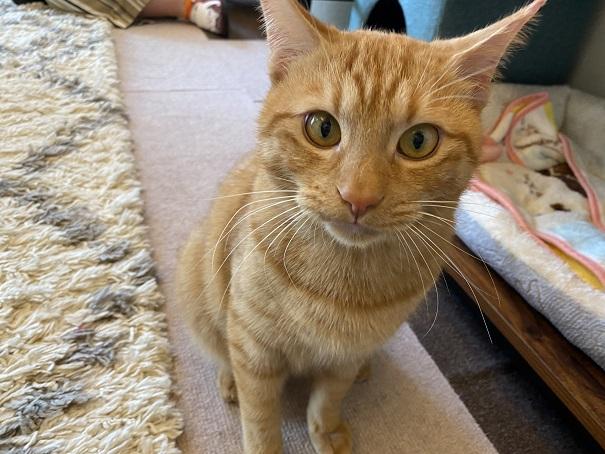 猫カフェnoa