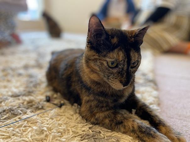 猫カフェnoa 猫