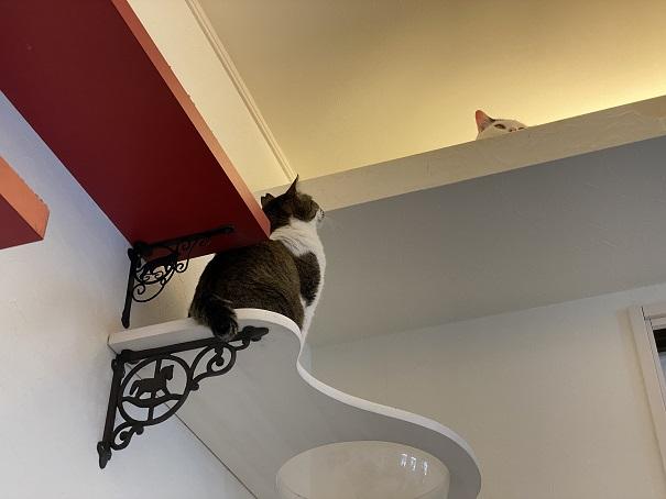 猫カフェNOA 上の猫