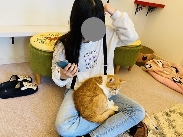 猫カフェnoa ふくくん