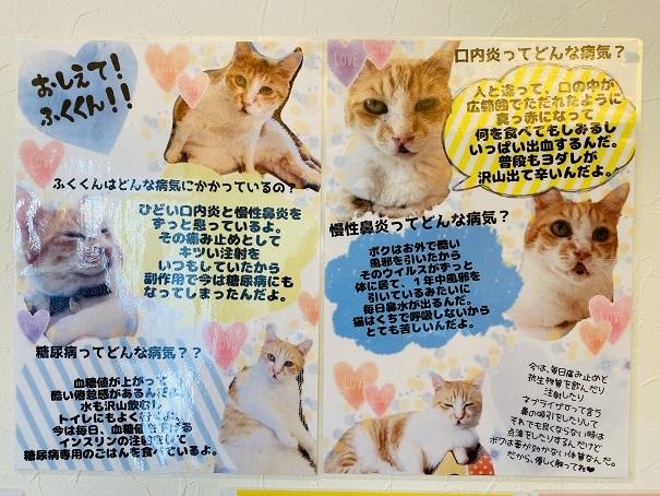 猫カフェnoa 福君説明