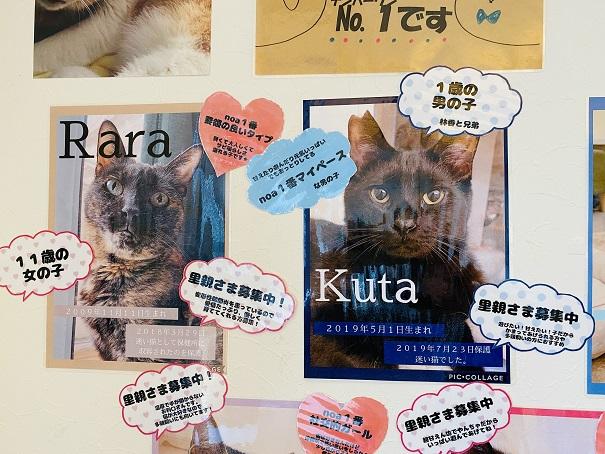 猫カフェnoa スタッフ1