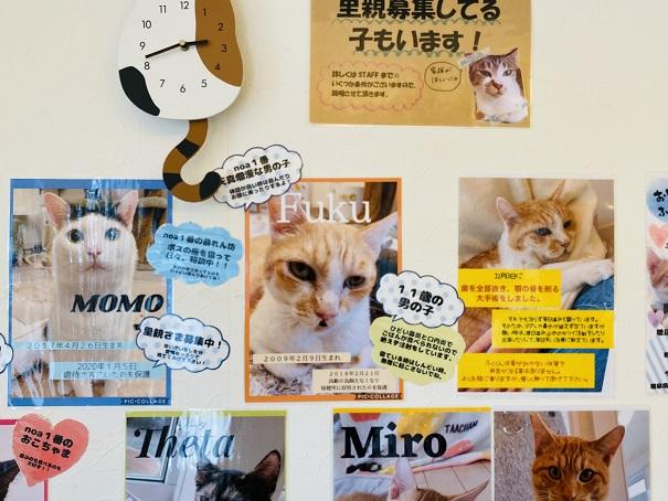 猫カフェnoa スタッフ4
