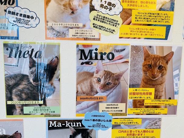 猫カフェnoa スタッフ5