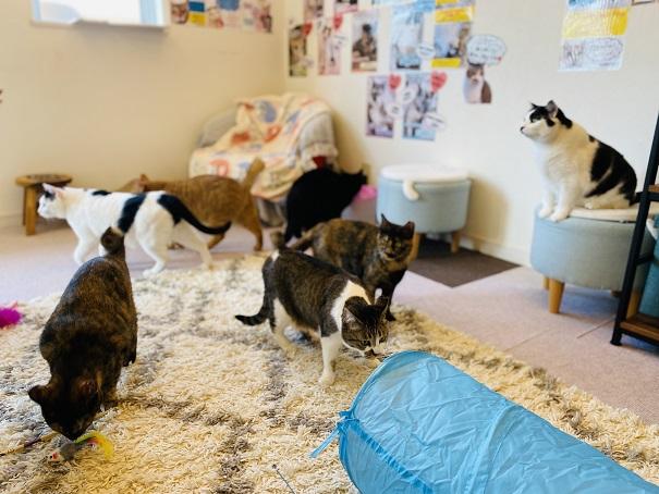 猫カフェnoa 猫たち