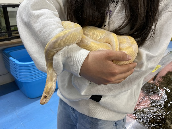 いきものふれあい学校 蛇と触れ合い