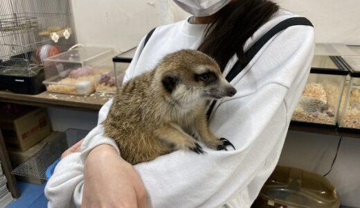いきものふれあい学校松山店 50種類の動物 見て触って遊ぶ