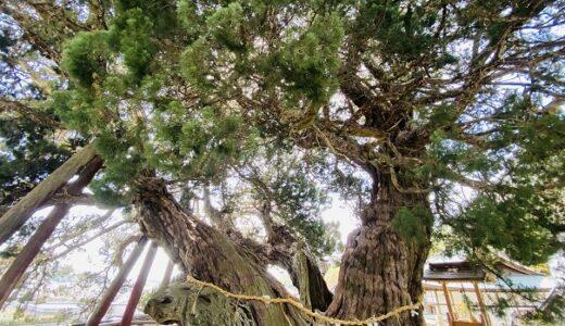 宝生院のシンパク 樹齢1600年 小豆島のパワースポット
