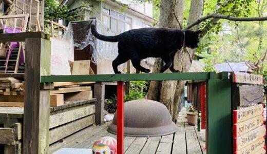猫の細道 ねこ好きには嬉しいノスタルジックな世界 尾道市