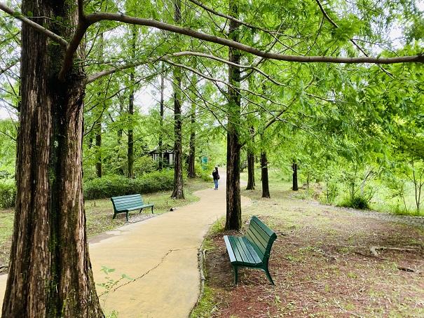 モネの庭 メタセコイヤの小道ベンチ