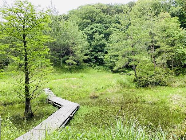 モネの庭 池