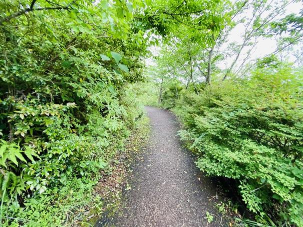 モネの庭 自然の森遊歩道
