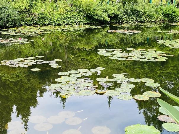 モネの庭 睡蓮の池近くで