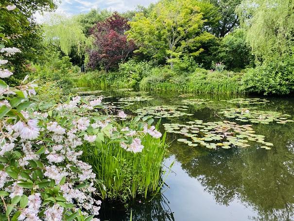 モネの庭水の庭 花と睡蓮