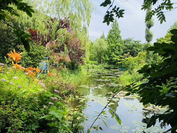 モネの庭 睡蓮の咲く池橋からの池
