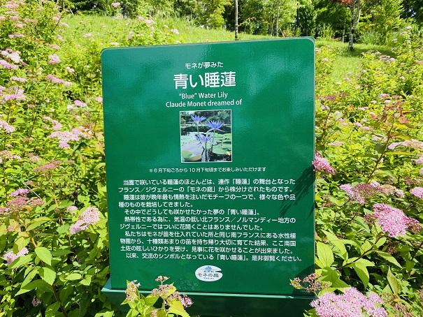 モネの庭 青い睡蓮