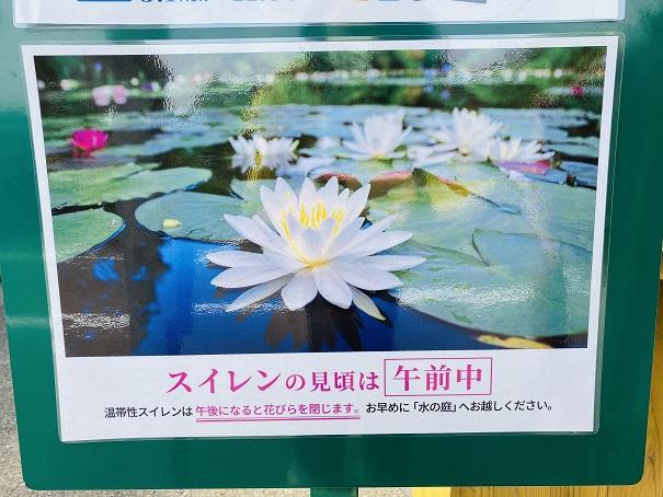 モネの庭 睡蓮の花の時間帯
