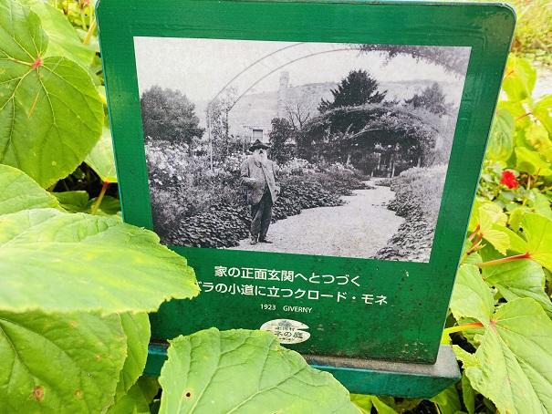 モネの庭 花の庭 モネの写真