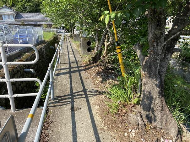 伊尾木洞への道