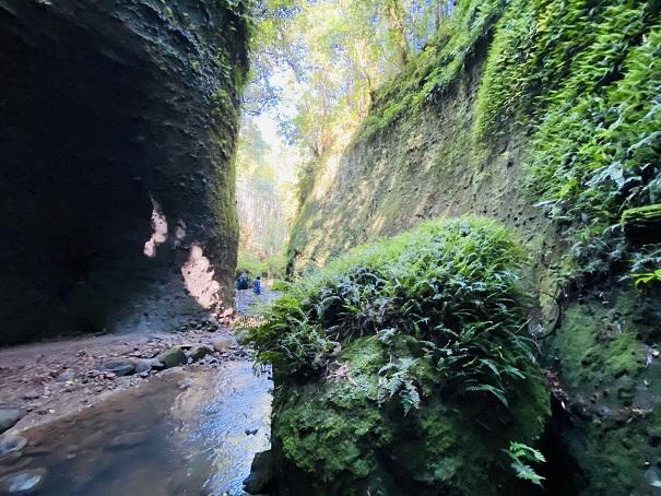 伊尾木洞出口付近 シダ植物