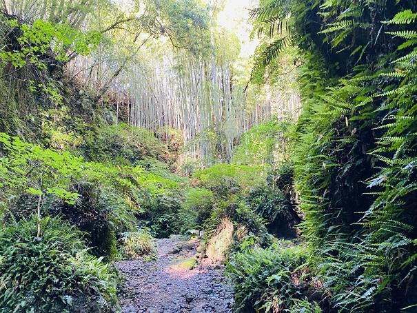 伊尾木洞から滝へ進む