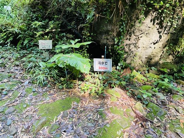 伊尾木洞滝まで300m