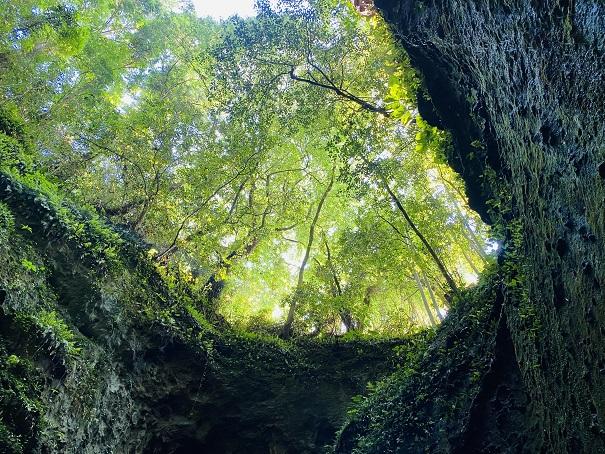伊尾木洞の上の新緑