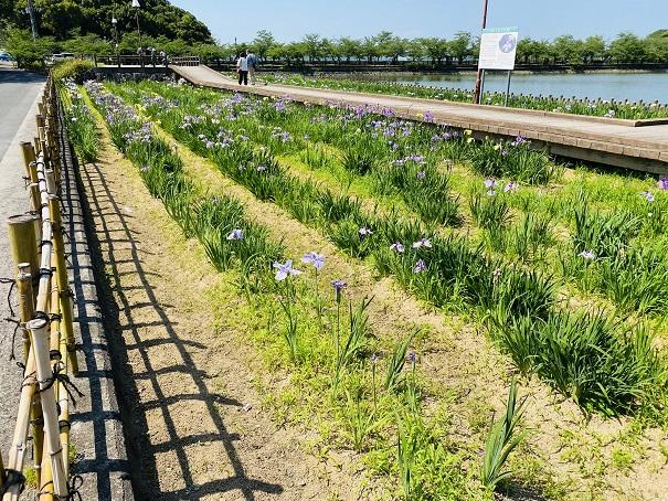亀鶴公園 花しょうぶ入口