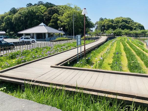 亀鶴公園 花しょうぶ遊歩道