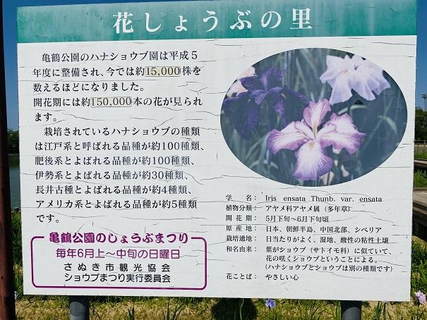 亀鶴公園 花しょうぶの里