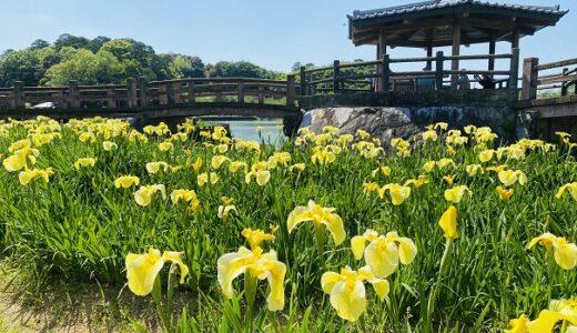 県立亀鶴公園 15万本の花しょうぶの里が美しい さぬき市