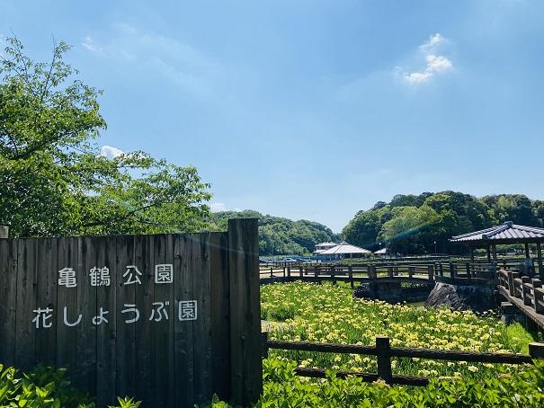 亀鶴公園 花しょうぶと看板
