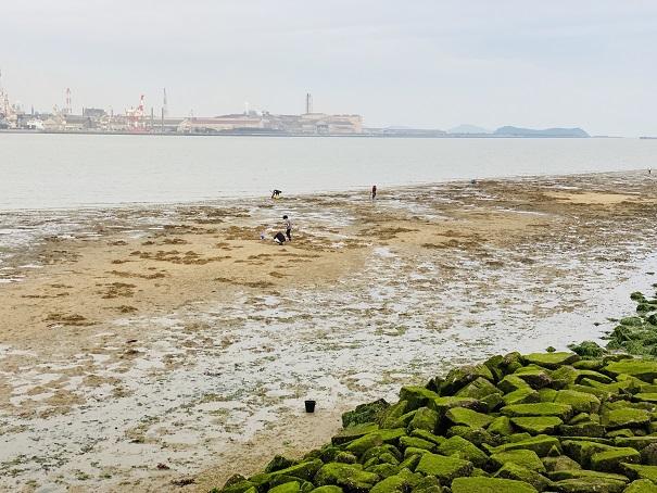 マテ貝の潮干狩りは干潮時