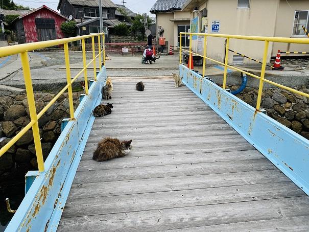 青島 港のネコ