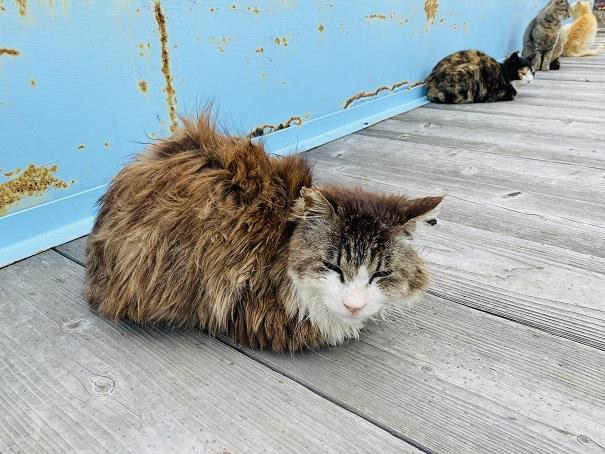 青島 港の毛の長いネコ