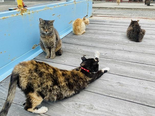 青島 伸びをするネコ
