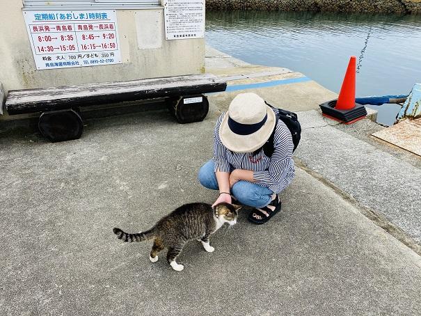 青島 港ですり寄る猫