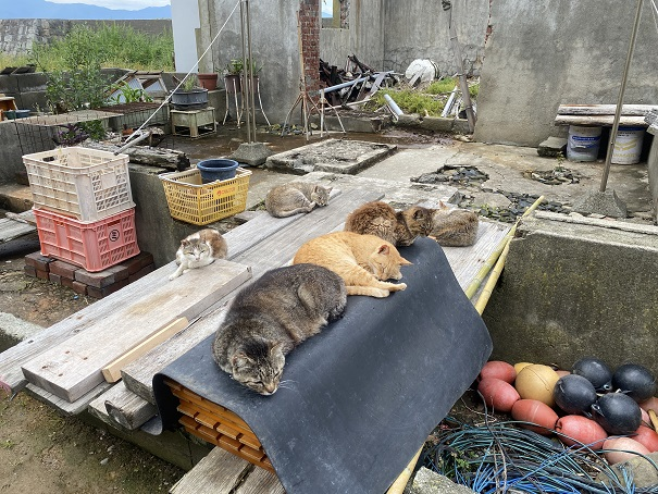 青島 猫のたまり場