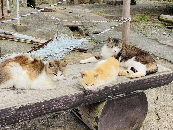 青島 ベンチで寝る猫